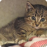 Adopt A Pet :: Buttons - Philadelphia, PA