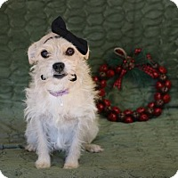 Adopt A Pet :: Nelly - Yucaipa, CA