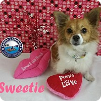 Adopt A Pet :: Hold - Sweetie - Arcadia, FL