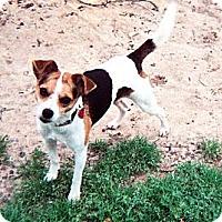 Adopt A Pet :: Pee Wee - St Simons, GA