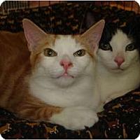 Adopt A Pet :: Pinto & Pogo - Chesapeake, VA