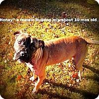 Adopt A Pet :: Honey - Gadsden, AL