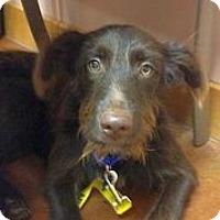 Adopt A Pet :: Luke Bryant - Austin, TX