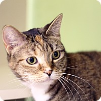 Adopt A Pet :: Good Golly - Chicago, IL