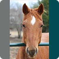 Adopt A Pet :: Ruckus - Farmersville, TX