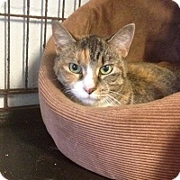 Adopt A Pet :: Precious - New Port Richey, FL