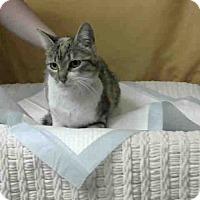 Adopt A Pet :: URGENT on 2/14 at DEVORE - San Bernardino, CA
