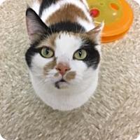 Adopt A Pet :: Winchester - Medina, OH