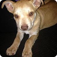 Adopt A Pet :: Kab - Adopted! - San Diego, CA