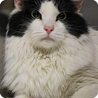 Adopt A Pet :: Kitty - Menands, NY