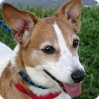 Adopt A Pet :: Mesha - Germantown, MD