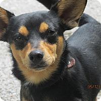 Adopt A Pet :: Bruce Wayne - Germantown, MD