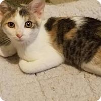 Adopt A Pet :: Danica - Chandler, AZ