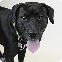 Adopt A Pet :: COCOA - Knoxville, TN