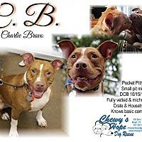 Adopt A Pet :: C.B. - Boyd, TX