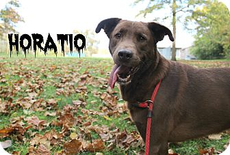 Labrador Retriever Mix Dog for adoption in Melbourne, Kentucky - Horatio
