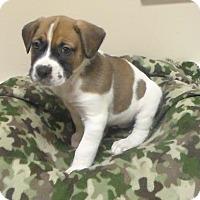 Adopt A Pet :: Hannibal - Lebanon, ME