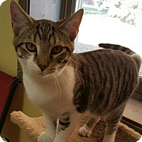"Adopt A Pet :: ""  BamBam "" - Scottsburg, IN"