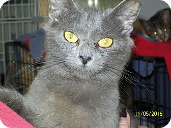 Domestic Mediumhair Cat for adoption in Mexia, Texas - Rumour