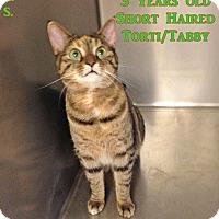 Adopt A Pet :: B-6 Maggie - Triadelphia, WV