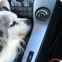 Adopt A Pet :: Bernard - Gilbert, AZ