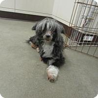 Adopt A Pet :: Shadow - Colfax, IL