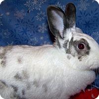 Adopt A Pet :: Pippa - Alexandria, VA