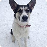 Adopt A Pet :: Jayde - Saskatoon, SK