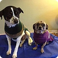 Adopt A Pet :: Spot And Ricco - Ponca City, OK