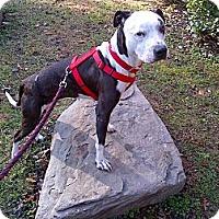 Adopt A Pet :: Lula - Conyers, GA