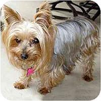 Adopt A Pet :: Anna - Jacksonville, FL