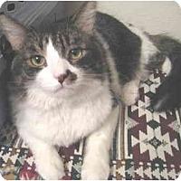 Adopt A Pet :: Winky - Mesa, AZ