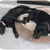 Adopt A Pet :: Sadie & Grace  **ADOPTED** - Eustis, FL