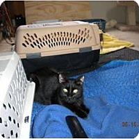 Adopt A Pet :: *Sir Purrsalot - Winder, GA