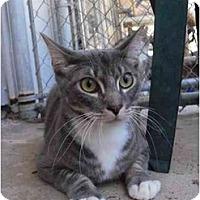 Adopt A Pet :: Dog - El Cajon, CA