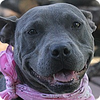 Adopt A Pet :: Zarina - North Olmsted, OH