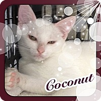 Adopt A Pet :: Coconut - Bradenton, FL