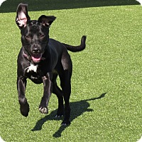 Adopt A Pet :: Domino - Meridian, ID