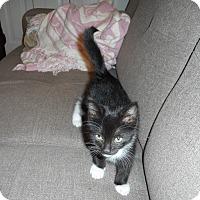 Adopt A Pet :: Shadow - Stafford, VA