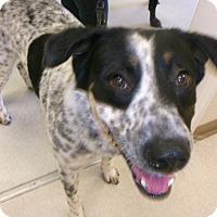Adopt A Pet :: Ramone - Emory, TX