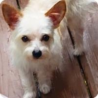 Adopt A Pet :: Mikey - Springfield, VA