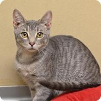 Adopt A Pet :: Cymbal151542 - Atlanta, GA