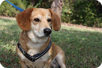 Adopt A Dog Conway Arkansas