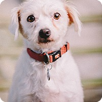 Adopt A Pet :: Frizzy - Portland, OR