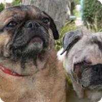Adopt A Pet :: Lulu - Pismo Beach, CA