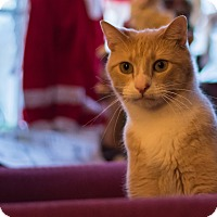 Adopt A Pet :: Simon - Staten Island, NY