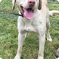 Adopt A Pet :: BUCK - Cadiz, OH