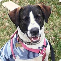 Adopt A Pet :: Andy Griffith - Richmond, VA