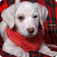 Adopt A Pet :: Freckles - Toms River, NJ