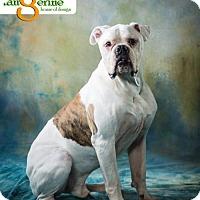 Adopt A Pet :: Tyson - Mayer, MN